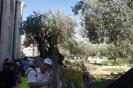 Израиль 2014_31